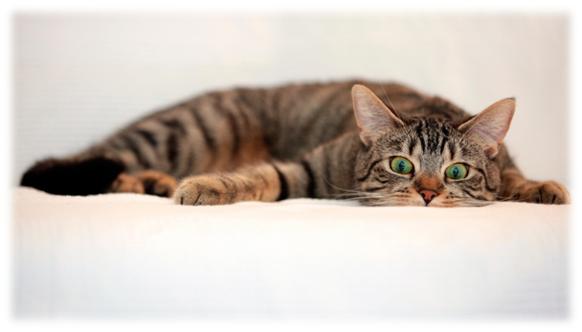 тепловой удар у кота что делать? | МосВетПомощь