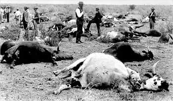 Чума крупного рогатого скота