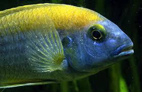 Лечение рыбок