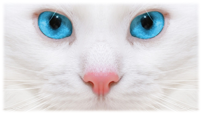 лечение глаз кошки