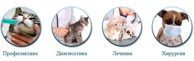 Ветеринарный цент МосВет Помощь, вызов ветеринара на дом Москва