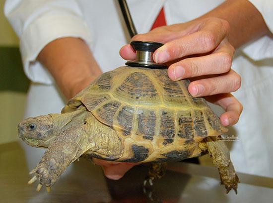 Лечение черепах в Москве