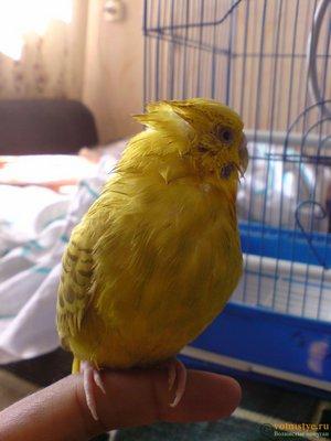 Заболел попугай - МосВет Помощь