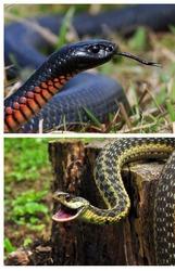 змея дома