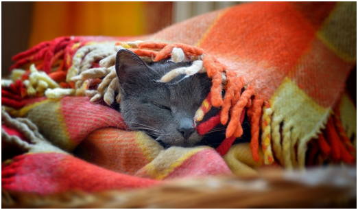 переохлаждение кота - что делать | МосВетПомощь
