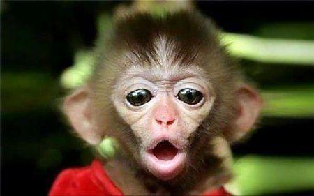обезьянка открыла рот | МосВетПомощь