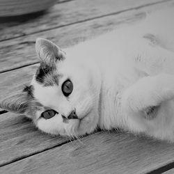 воспаление почек у котов | МосВетПомощь