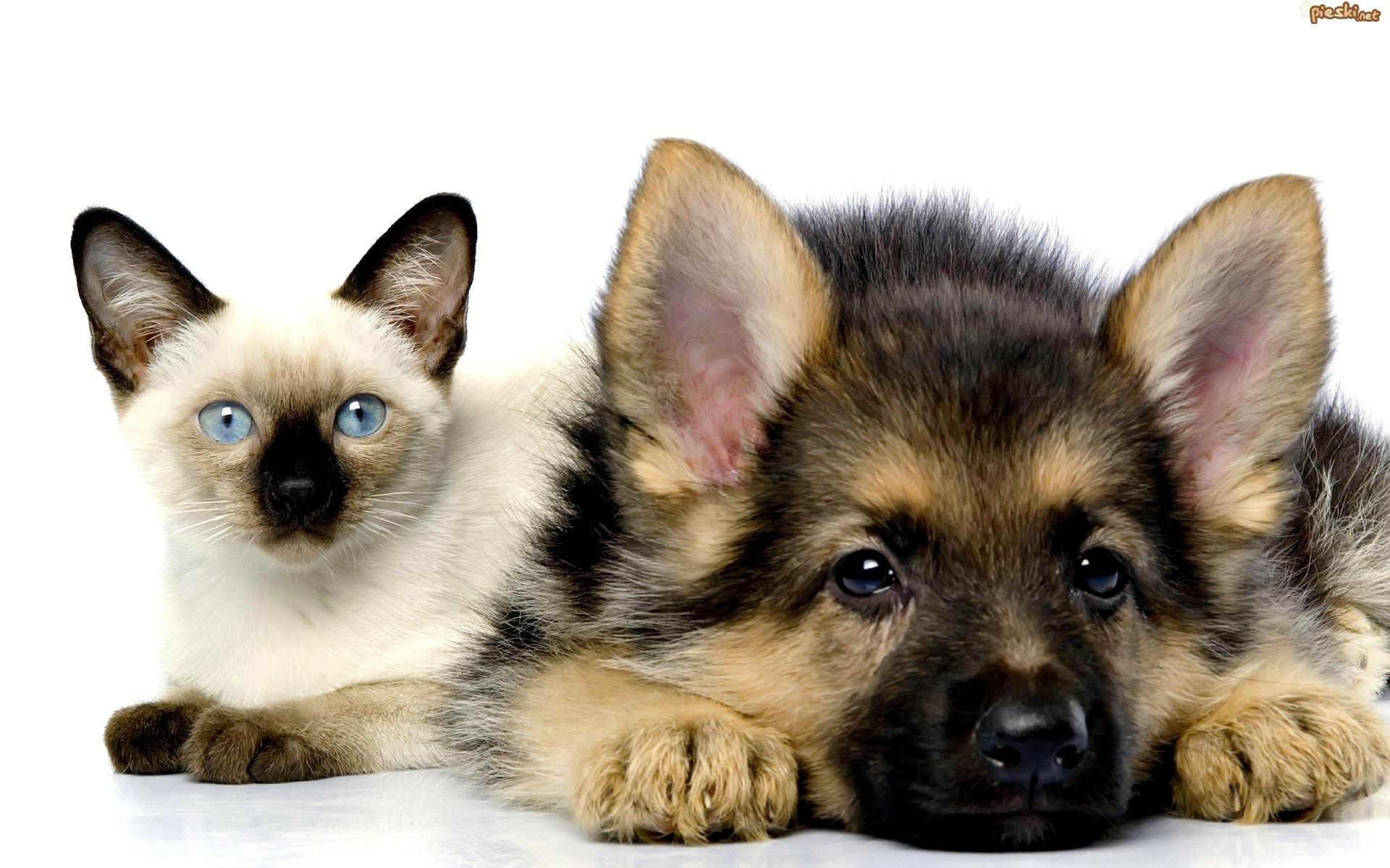 домашние животные кот и собака | МосВетПомощь