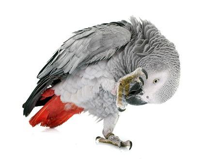 Инфекционные болезни птиц | МосВетПомощь