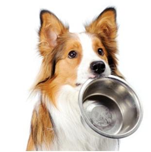 Натуральный корм или сухой для собак