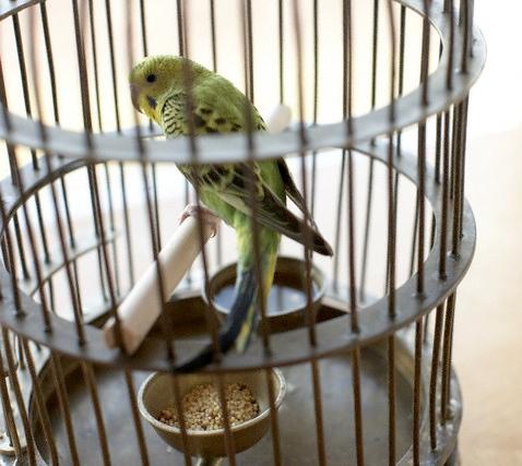 лечение попугаев Москва