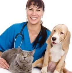 vetpomosh-moskva-veterinar