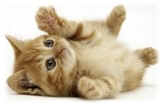 лечение глаз котенка