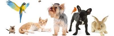 Лечение животных в МосВет Помощь