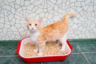 кот не ходит на лоток ветеринар