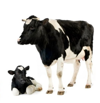 родовспоможение животным | МосВетПомощь