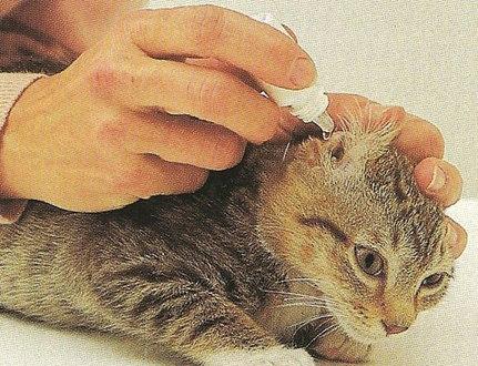 Лечение кошек от ушного клеща