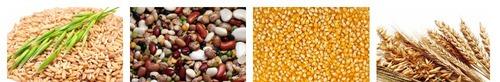 зерновые бобовые