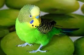 Глаза и клюв птиц