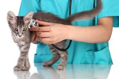 диагностика кошек москва