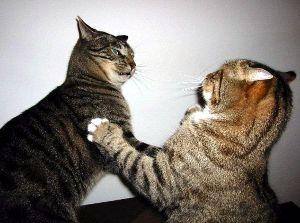 вирус иммунодефицита кошек | МосВетПомощь