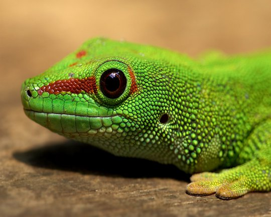 Заболевания рептилий