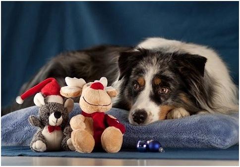 стресс собаки после праздников   МосВетПомощь
