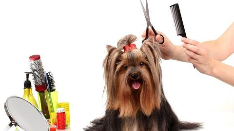 подстричь собаку самостоятельно