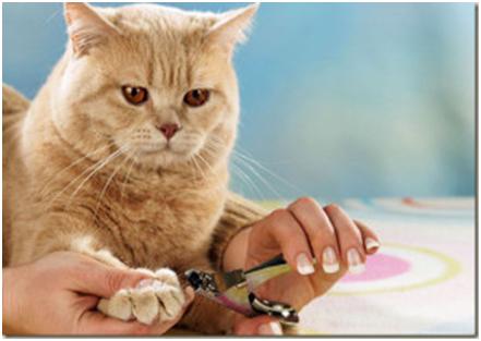 подстричь когти коту