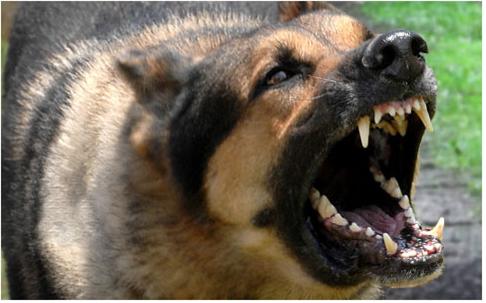 вакцинация собак и кошек | МосВетПомощь