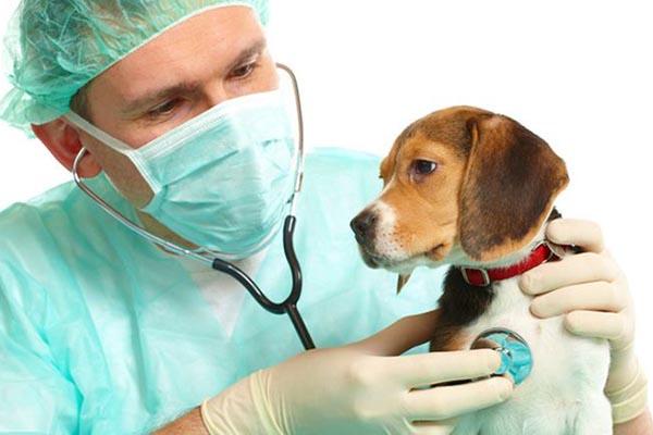 глаза и нос больной собаки