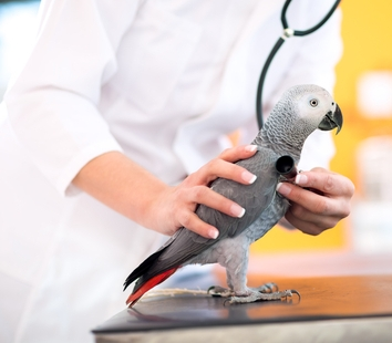 диагностика попугаев