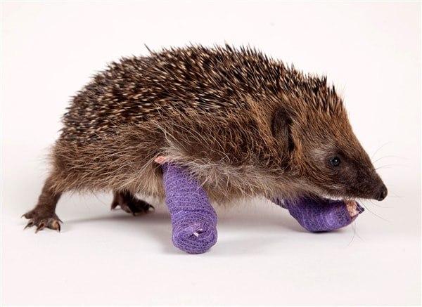 Лечение ортопедических проблем у животных