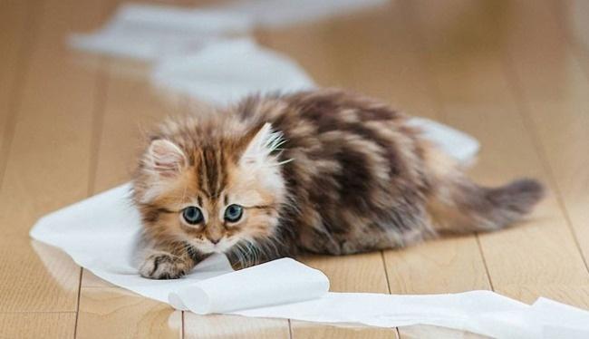 понос у кота