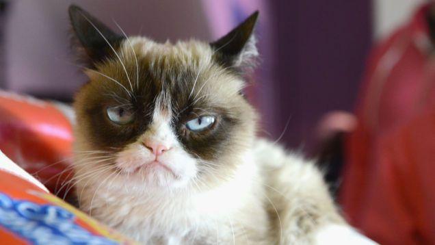 что ненавидят кошки